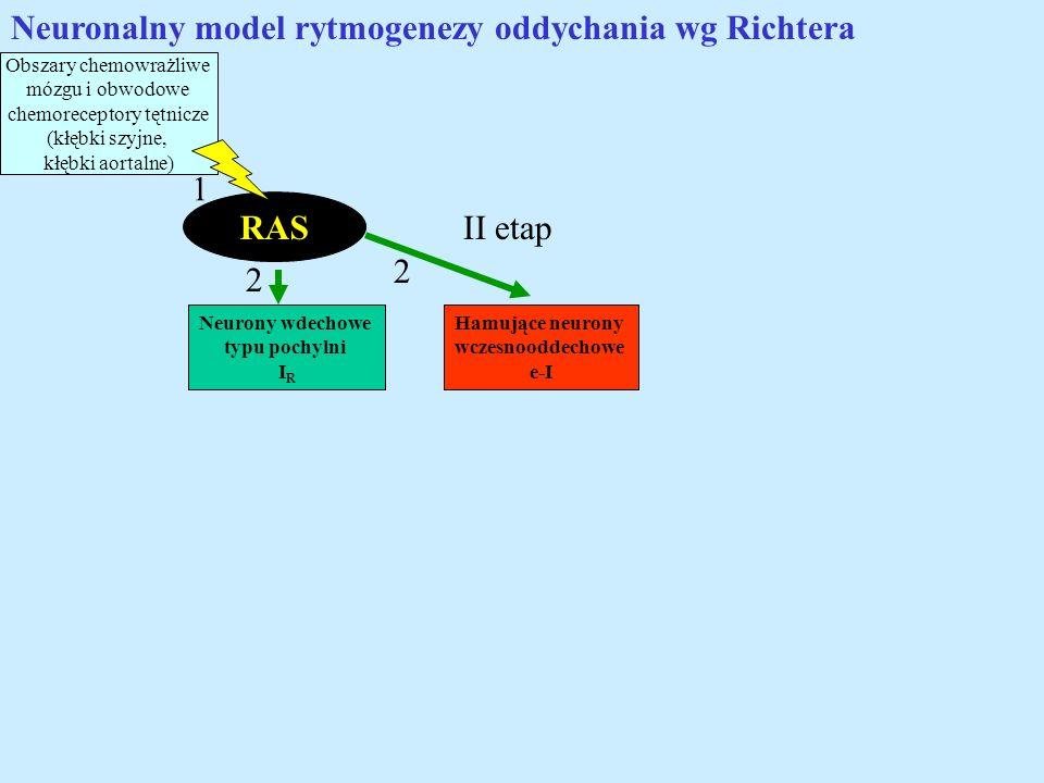 Neuronalny model rytmogenezy oddychania wg Richtera