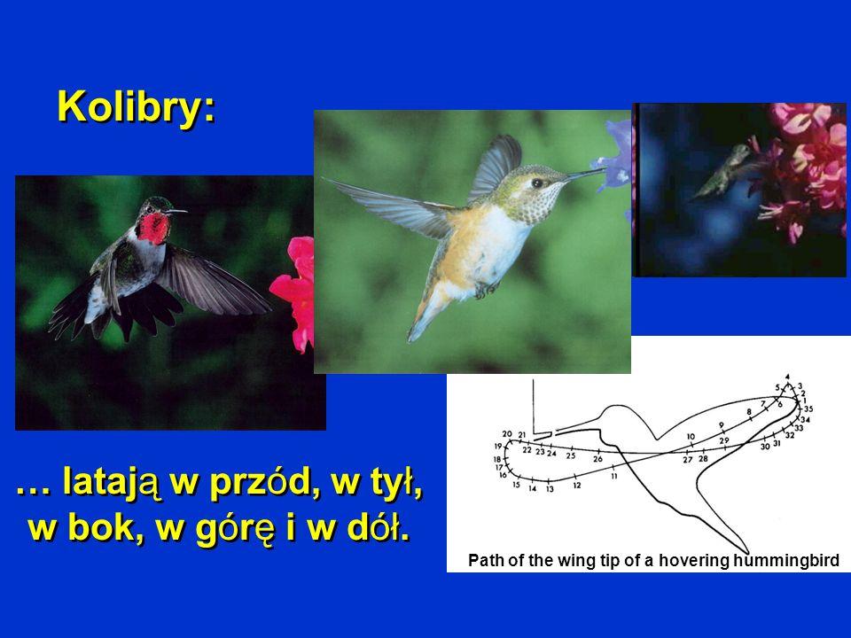 … latają w przód, w tył, w bok, w górę i w dół.