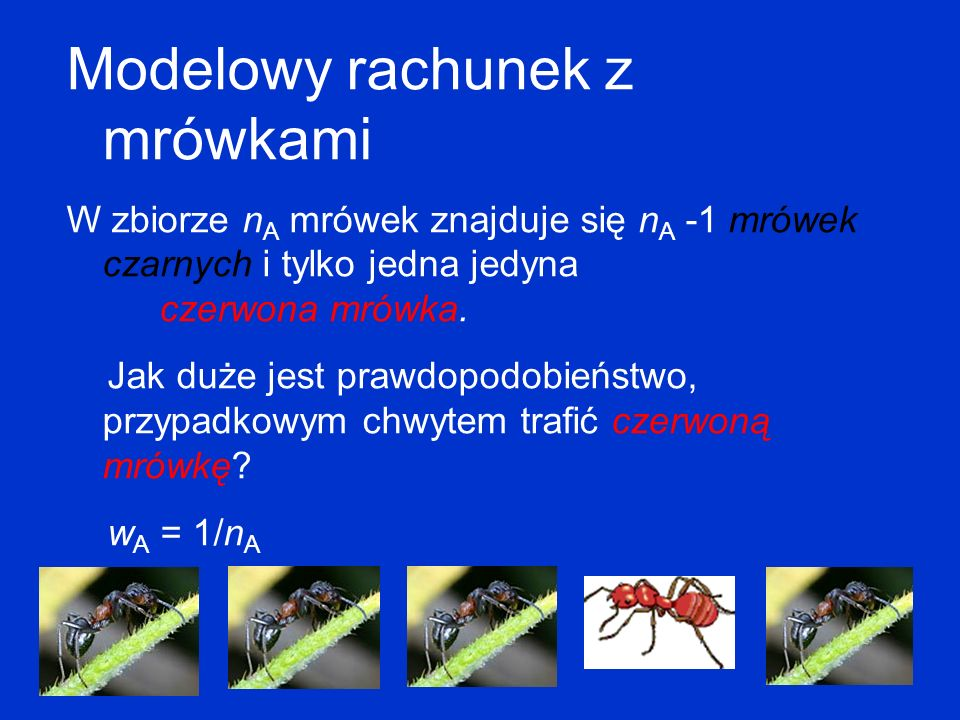 Modelowy rachunek z mrówkami