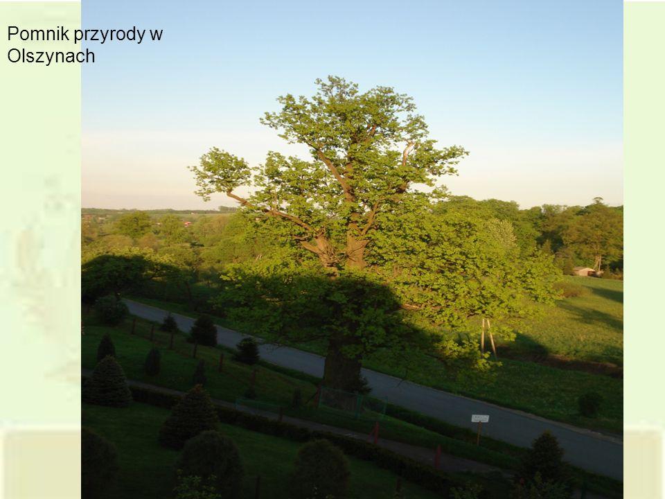 Pomnik przyrody w Olszynach