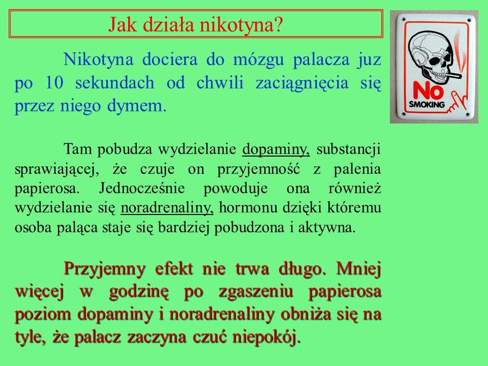 Jak działa nikotyna Nikotyna dociera do mózgu palacza juz po 10 sekundach od chwili zaciągnięcia się przez niego dymem.