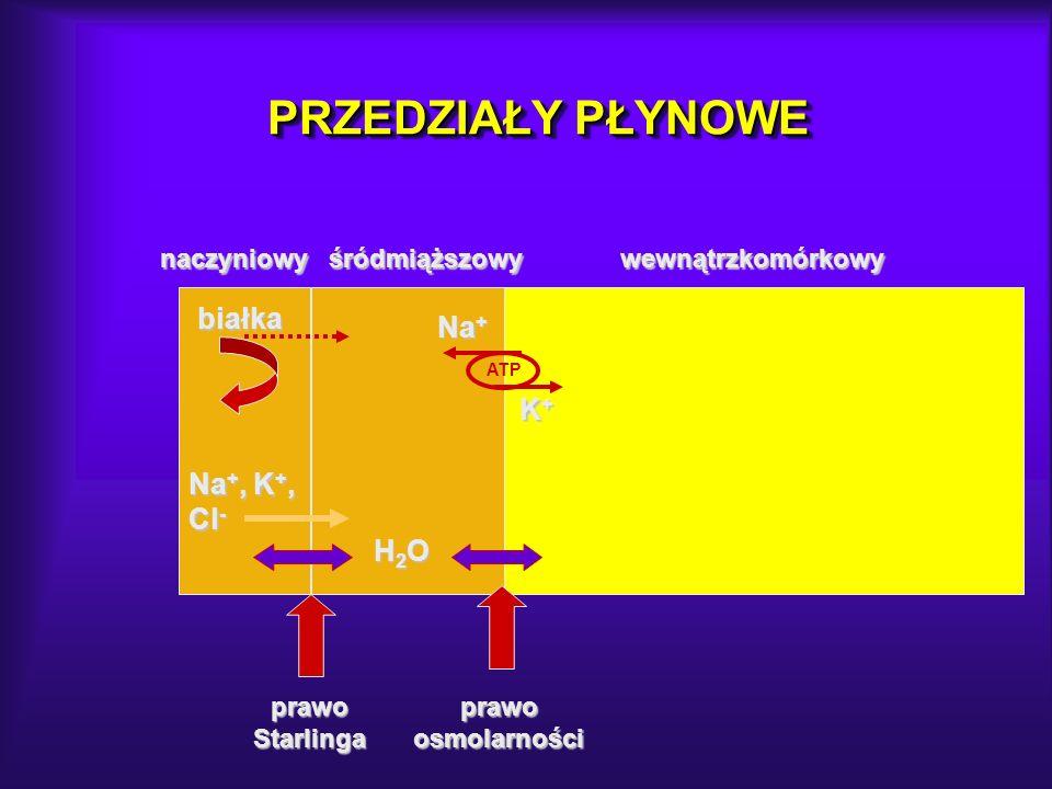 PRZEDZIAŁY PŁYNOWE białka Na+ K+ Na+, K+, Cl- H2O