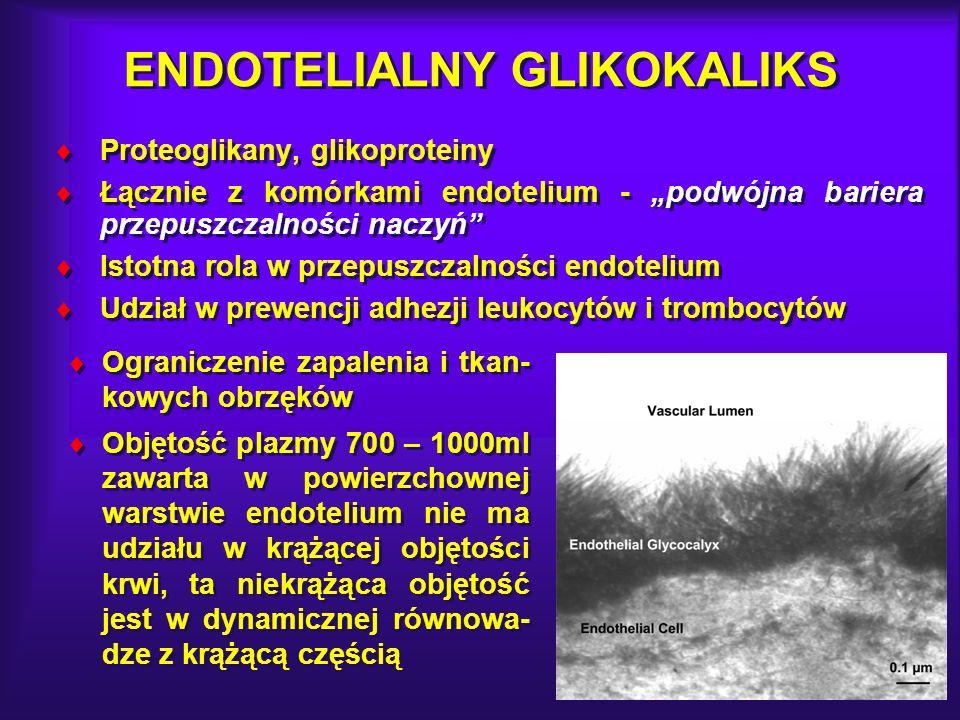 ENDOTELIALNY GLIKOKALIKS