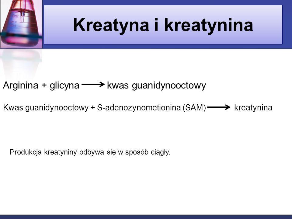 Kreatyna i kreatynina Arginina + glicyna kwas guanidynooctowy