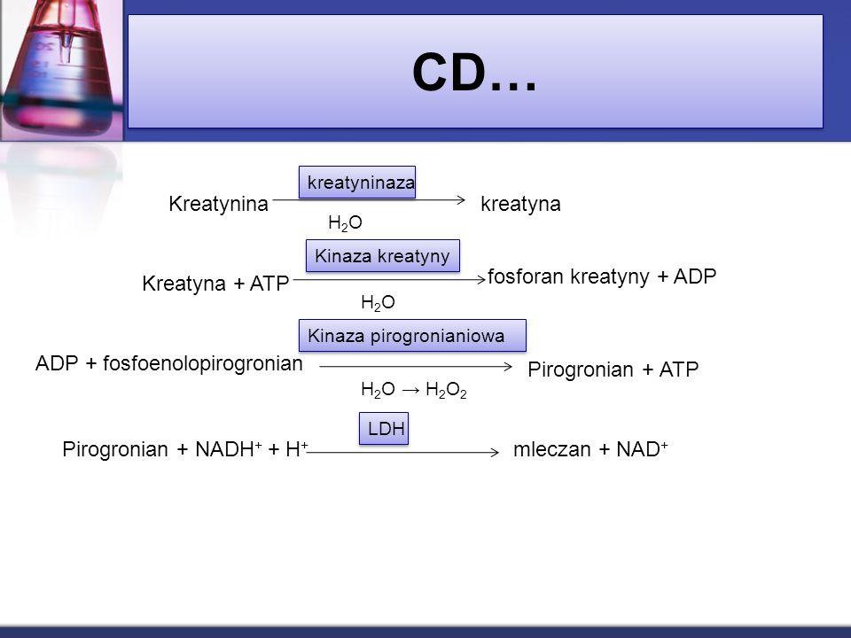 CD… Kreatynina kreatyna fosforan kreatyny + ADP Kreatyna + ATP