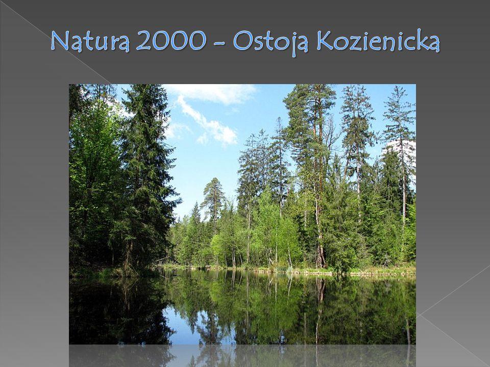 Natura 2000 - Ostoja Kozienicka