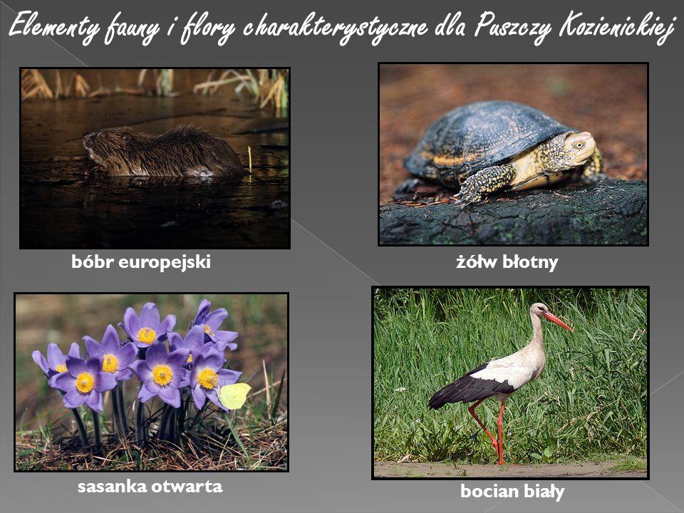 Elementy fauny i flory charakterystyczne dla Puszczy Kozienickiej