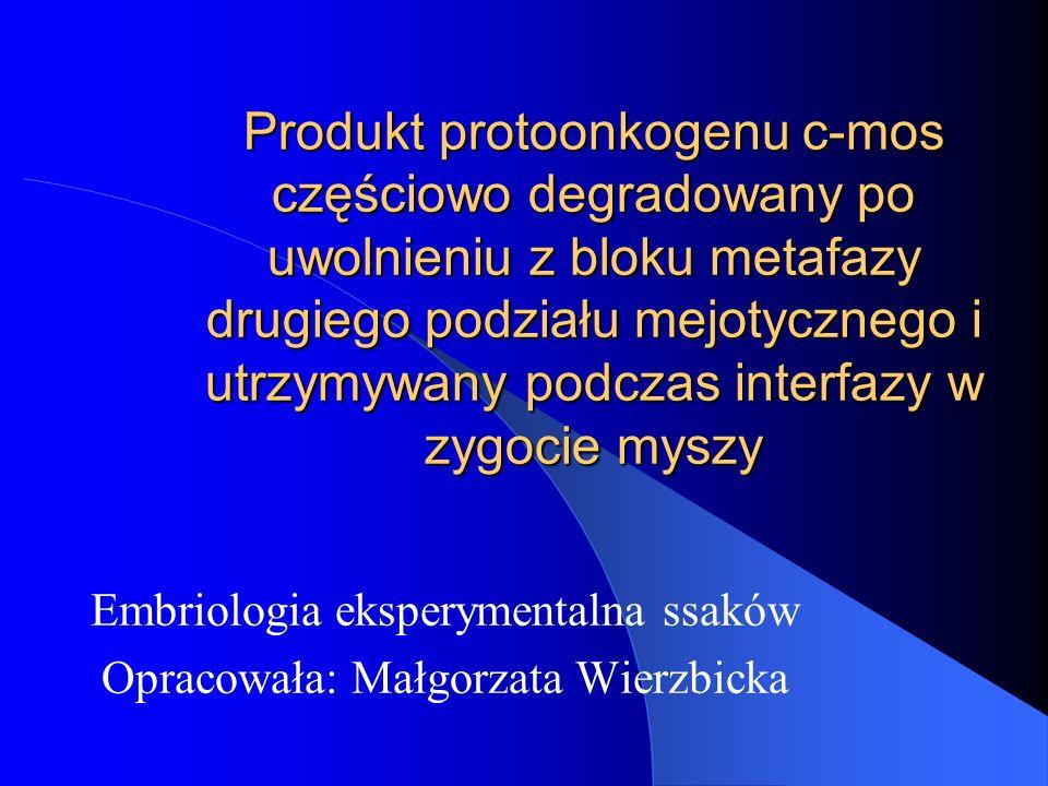Embriologia eksperymentalna ssaków Opracowała: Małgorzata Wierzbicka
