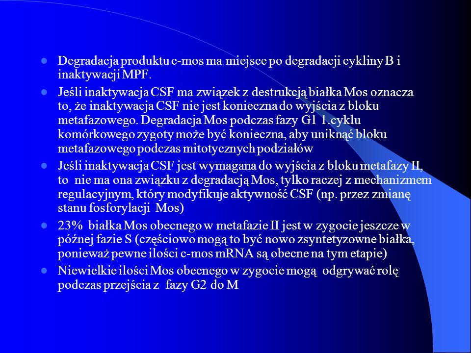 Degradacja produktu c-mos ma miejsce po degradacji cykliny B i inaktywacji MPF.
