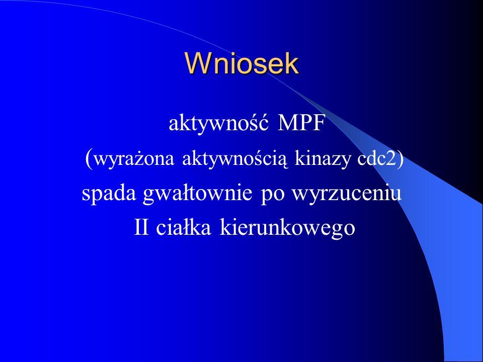 Wniosek aktywność MPF (wyrażona aktywnością kinazy cdc2)