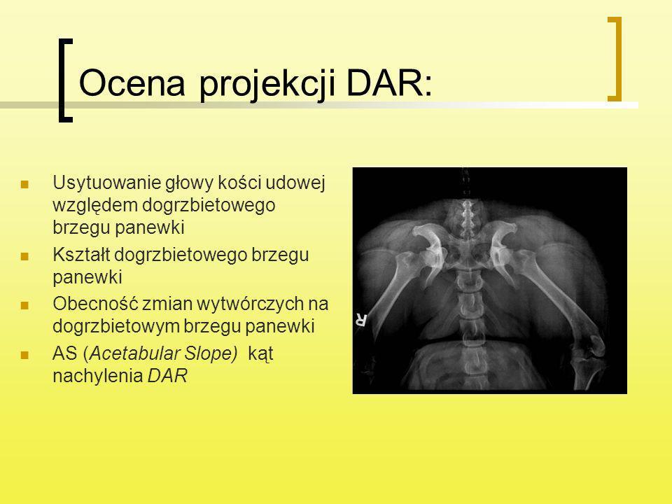 Ocena projekcji DAR:Usytuowanie głowy kości udowej względem dogrzbietowego brzegu panewki. Kształt dogrzbietowego brzegu panewki.