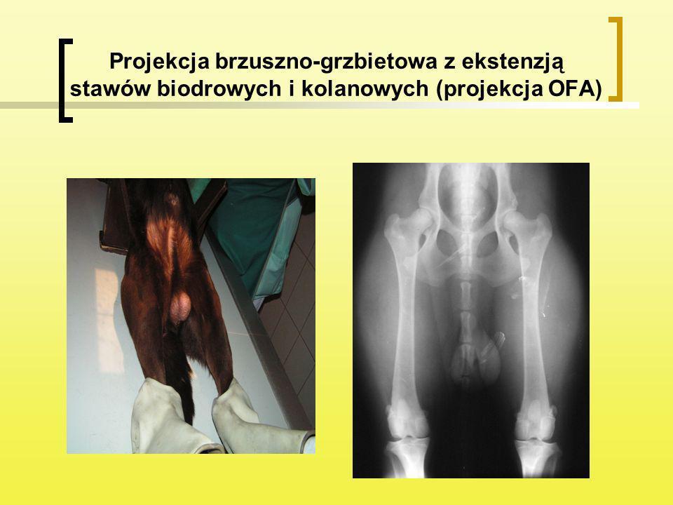 Projekcja brzuszno-grzbietowa z ekstenzją stawów biodrowych i kolanowych (projekcja OFA)