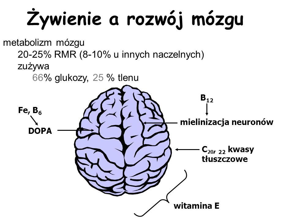 Żywienie a rozwój mózgu