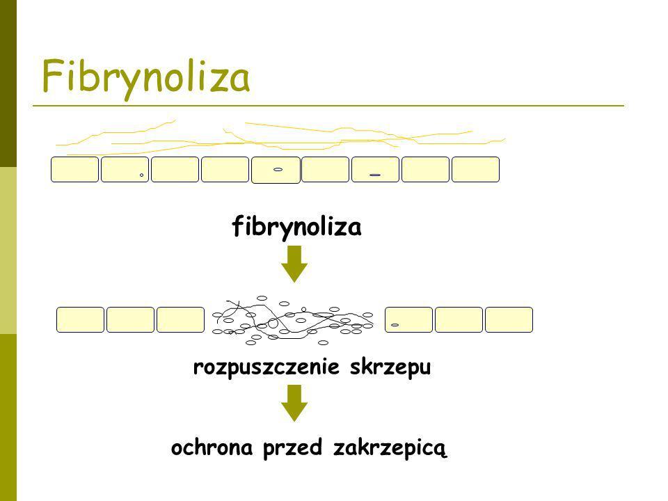 Fibrynoliza fibrynoliza rozpuszczenie skrzepu ochrona przed zakrzepicą