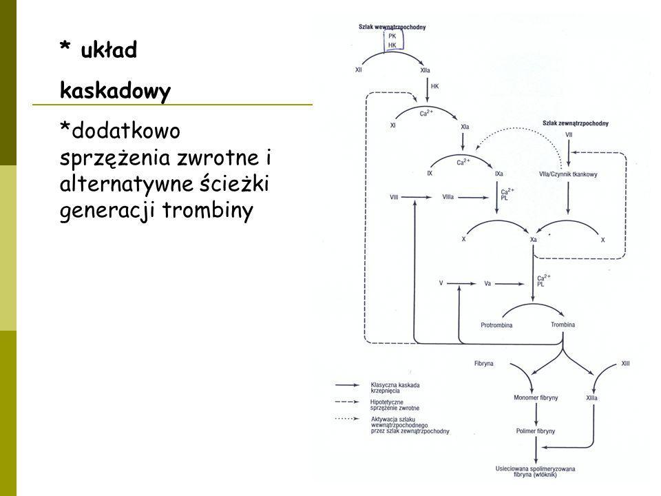 * układ kaskadowy *dodatkowo sprzężenia zwrotne i alternatywne ścieżki generacji trombiny