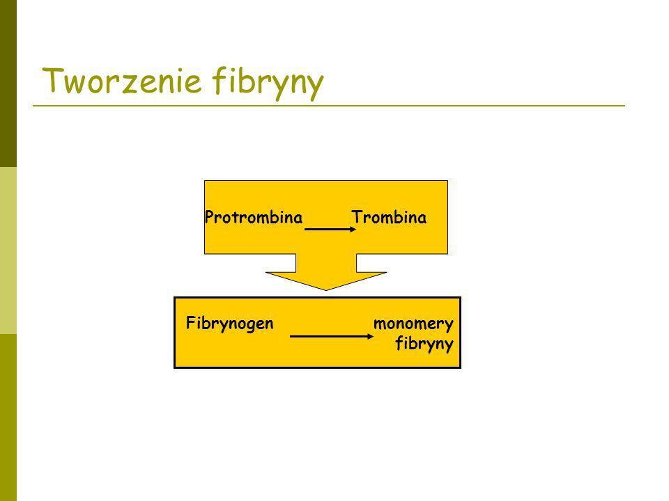 Tworzenie fibryny Protrombina Trombina Fibrynogen monomery fibryny