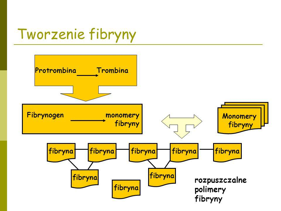 Tworzenie fibryny rozpuszczalne polimery fibryny Protrombina Trombina