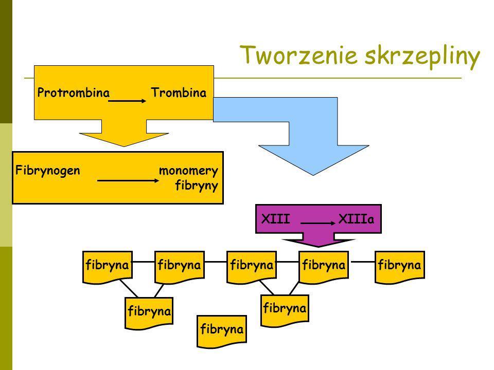 Tworzenie skrzepliny Protrombina Trombina Fibrynogen monomery fibryny