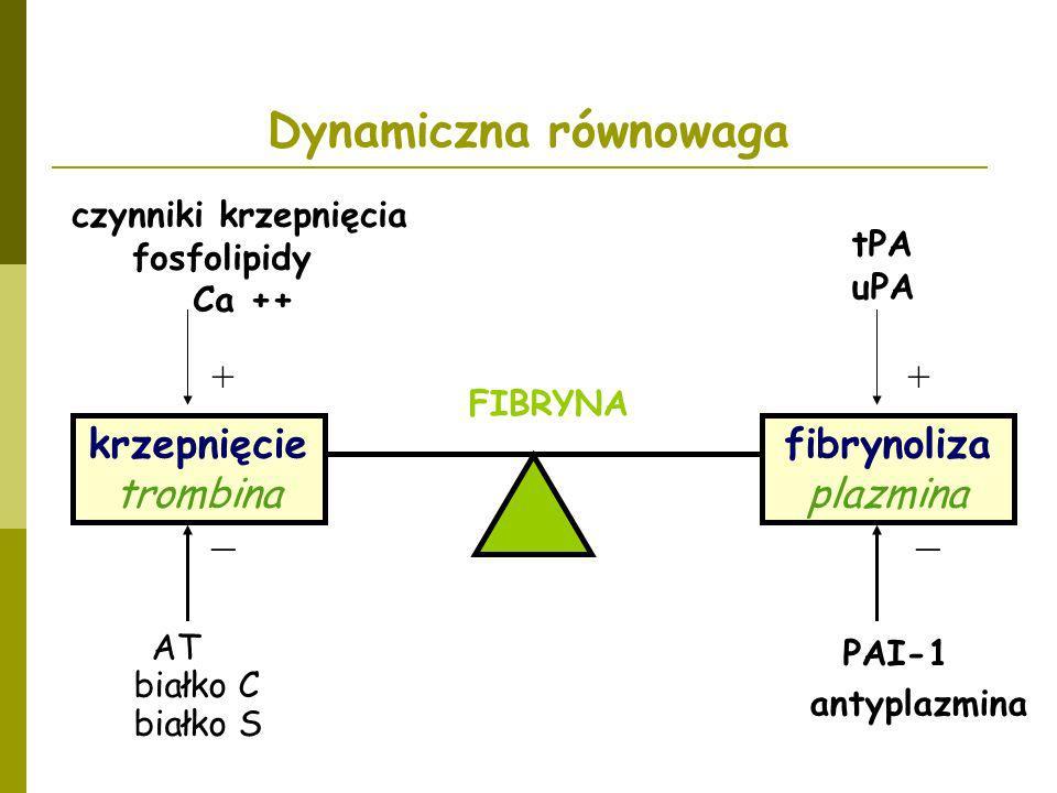 Dynamiczna równowaga _ _ + + krzepnięcie trombina fibrynoliza plazmina