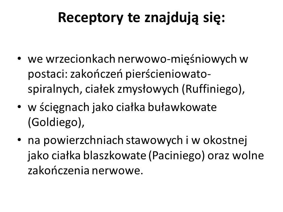 Receptory te znajdują się: