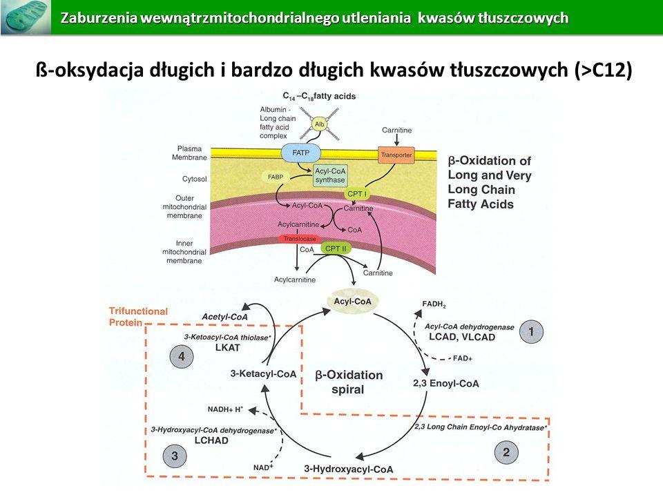 ß-oksydacja długich i bardzo długich kwasów tłuszczowych (>C12)