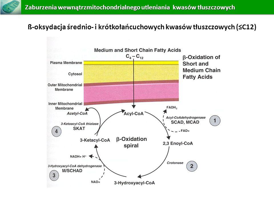 ß-oksydacja średnio- i krótkołańcuchowych kwasów tłuszczowych (≤C12)