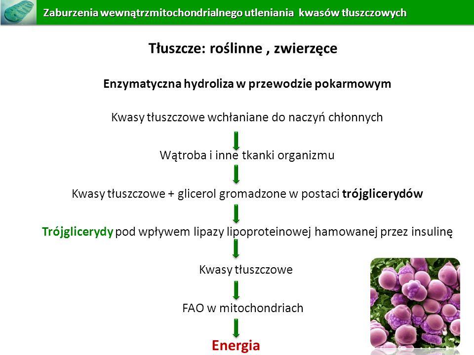Enzymatyczna hydroliza w przewodzie pokarmowym