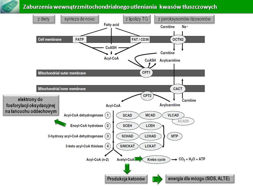 fosforylacji oksydacyjnej na łańcuchu oddechowym
