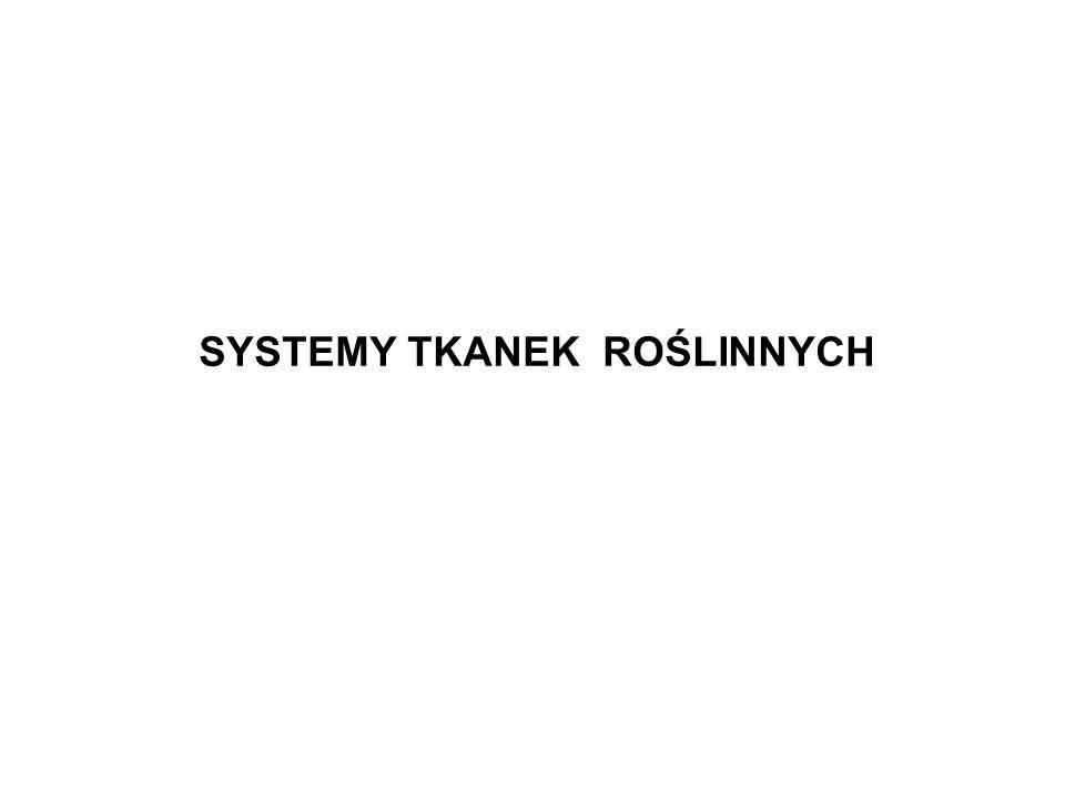 SYSTEMY TKANEK ROŚLINNYCH