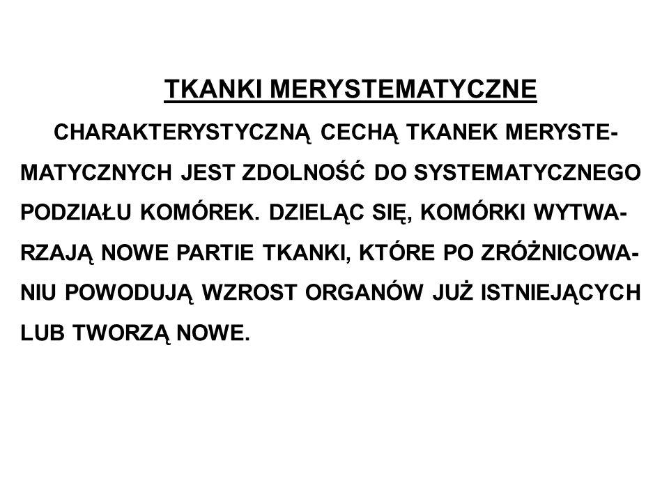 TKANKI MERYSTEMATYCZNE