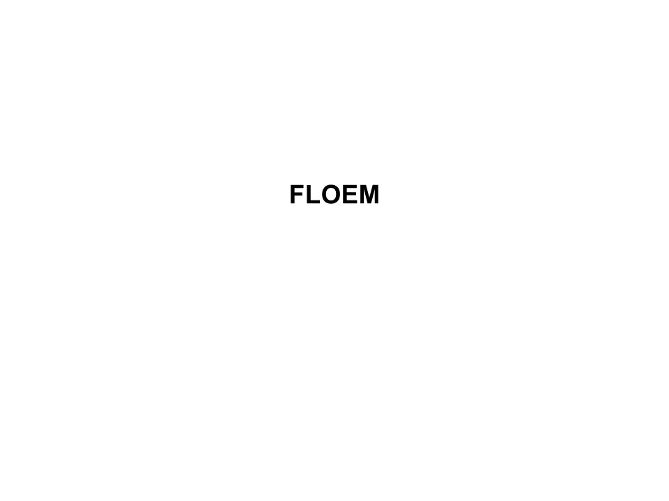 FLOEM