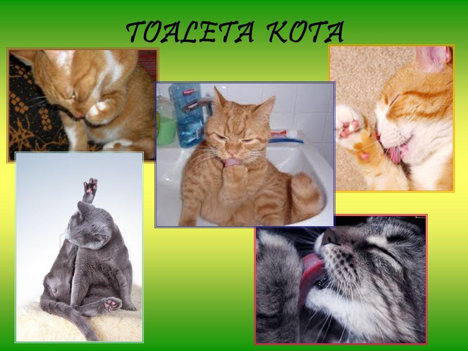 TOALETA KOTA