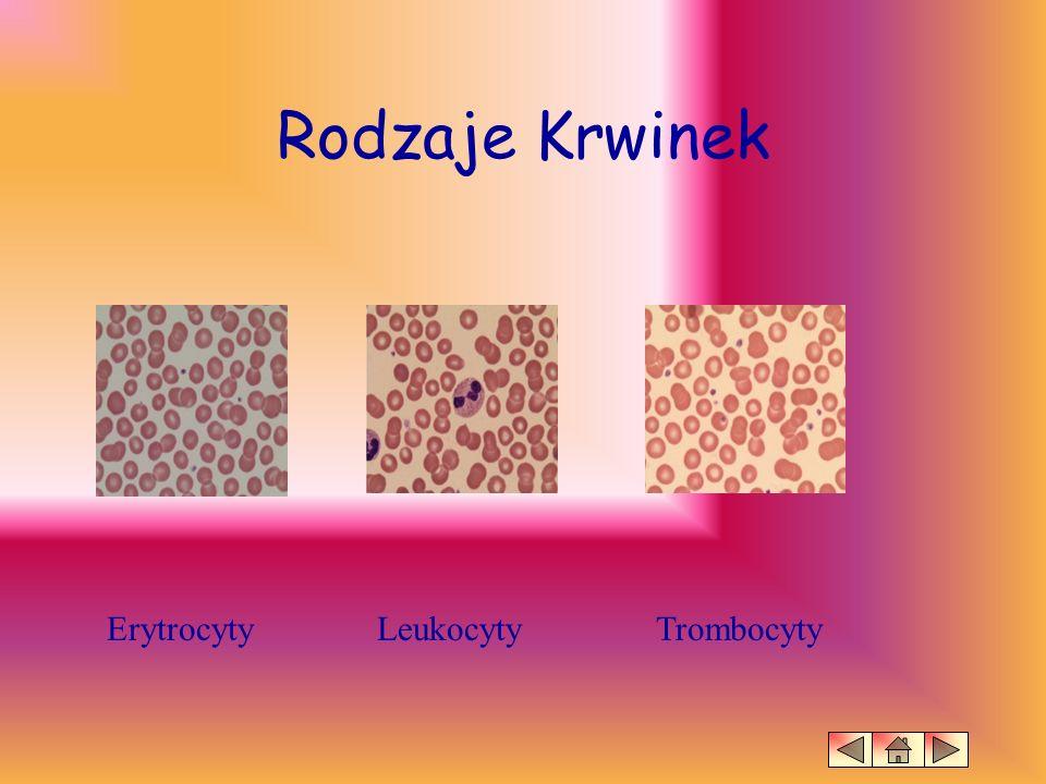 Rodzaje Krwinek Erytrocyty Leukocyty Trombocyty