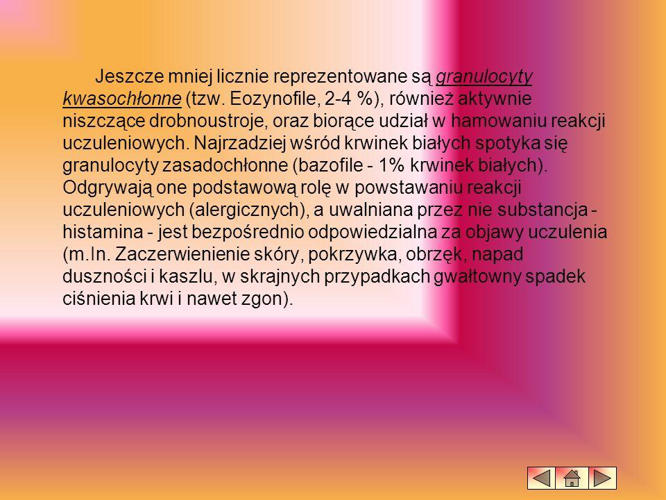 Jeszcze mniej licznie reprezentowane są granulocyty kwasochłonne (tzw