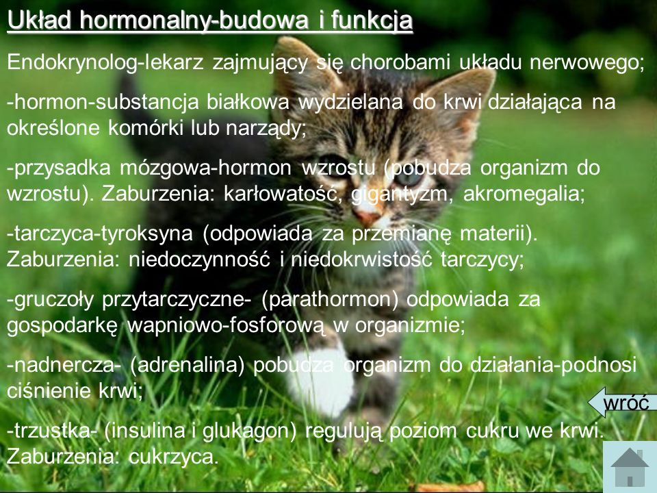 Układ hormonalny-budowa i funkcja