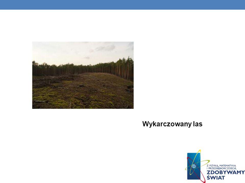 Wykarczowany las
