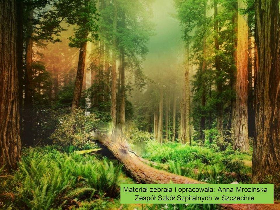 Materiał zebrała i opracowała: Anna Mrozińska