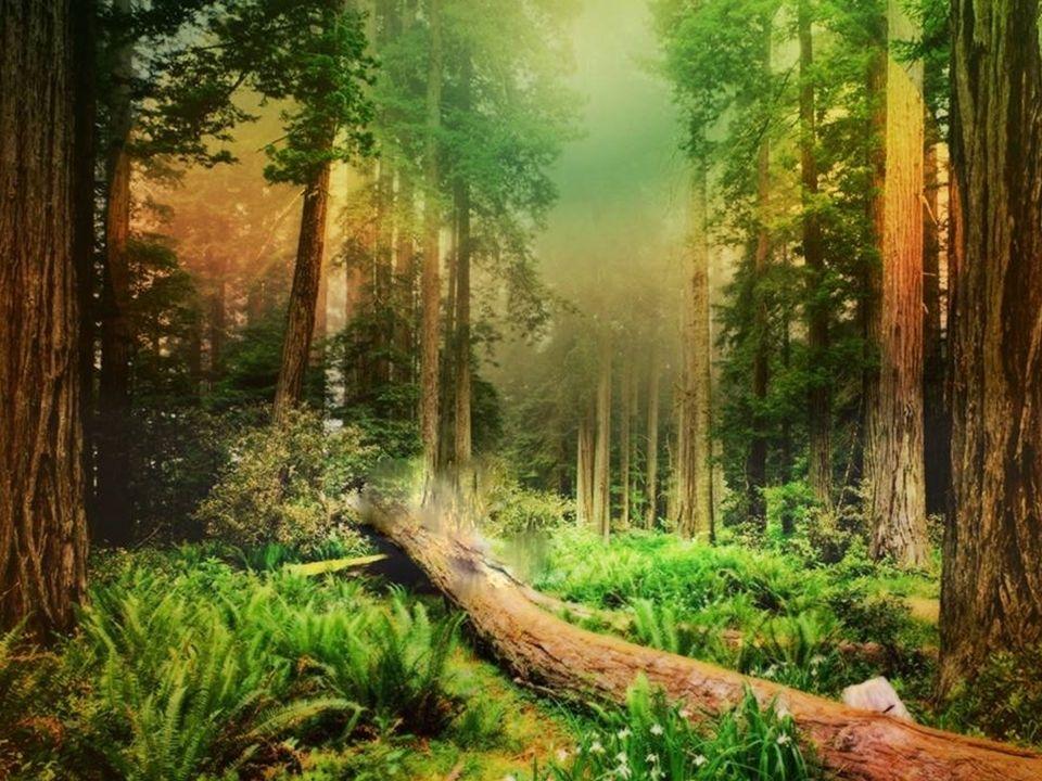 korony drzew podszyt runo ściółka