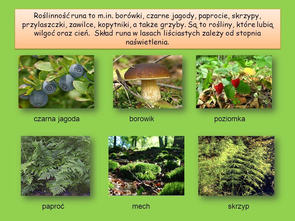 Roślinność runa to m.in. borówki, czarne jagody, paprocie, skrzypy, przylaszczki, zawilce, kopytniki, a także grzyby. Są to rośliny, które lubią wilgoć oraz cień. Skład runa w lasach liściastych zależy od stopnia naświetlenia.