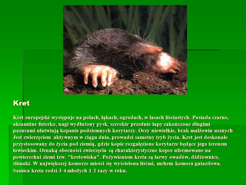 Kret Kret europejski występuje na polach, łąkach, ogrodach, w lasach liściastych.