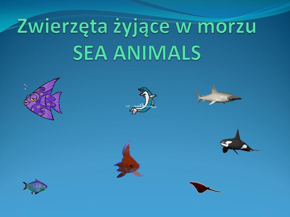 Zwierzęta żyjące w morzu SEA ANIMALS
