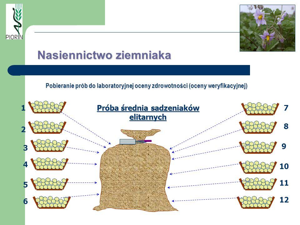Próba średnia sadzeniaków elitarnych