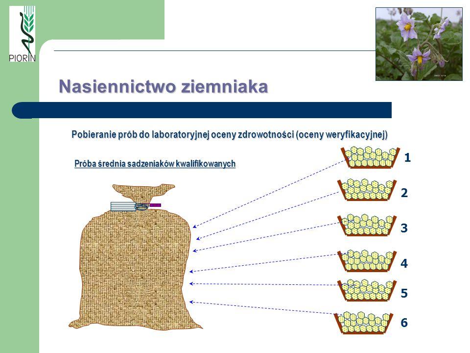 Próba średnia sadzeniaków kwalifikowanych