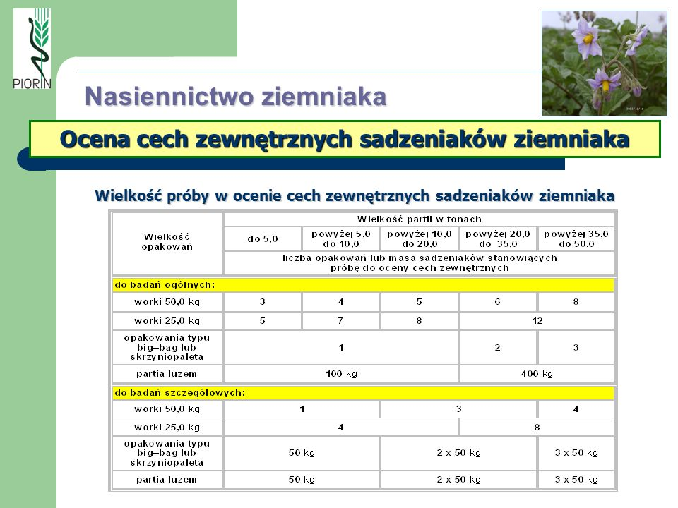 Ocena cech zewnętrznych sadzeniaków ziemniaka