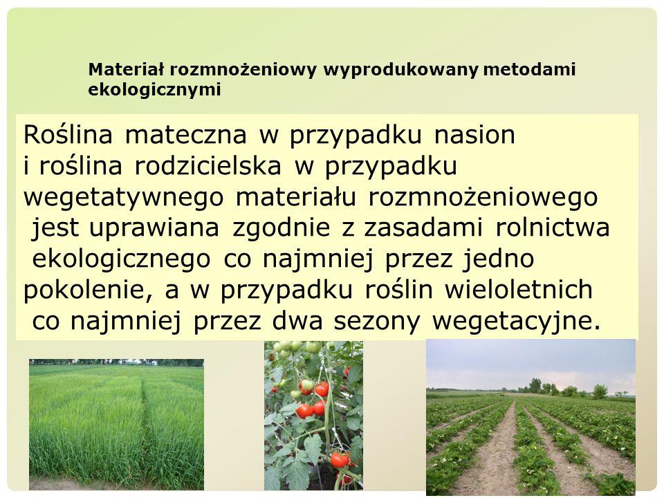 Roślina mateczna w przypadku nasion i roślina rodzicielska w przypadku