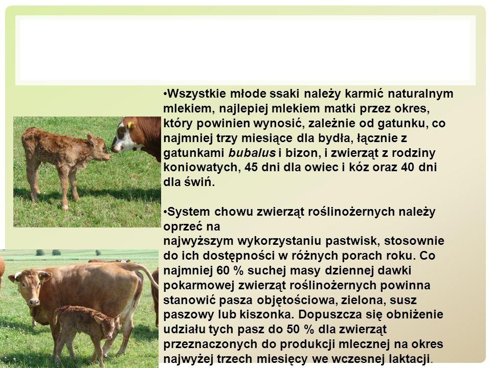 Wszystkie młode ssaki należy karmić naturalnym mlekiem, najlepiej mlekiem matki przez okres, który powinien wynosić, zależnie od gatunku, co najmniej trzy miesiące dla bydła, łącznie z gatunkami bubalus i bizon, i zwierząt z rodziny koniowatych, 45 dni dla owiec i kóz oraz 40 dni dla świń.