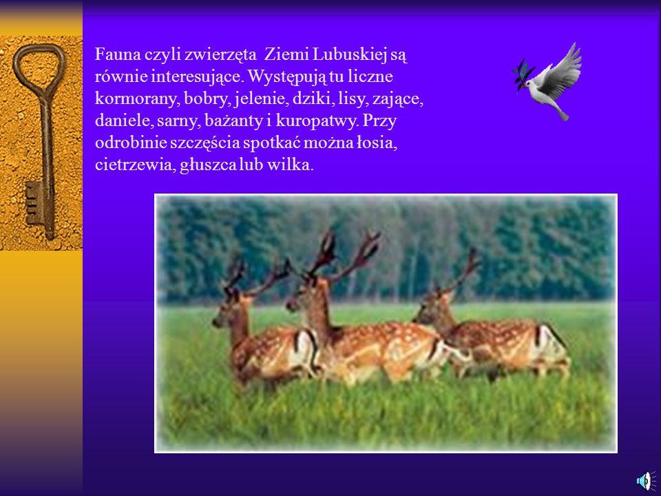 Fauna czyli zwierzęta Ziemi Lubuskiej są równie interesujące