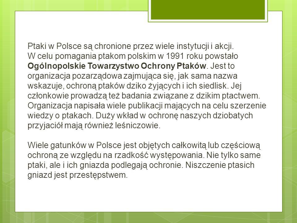 Ptaki w Polsce są chronione przez wiele instytucji i akcji