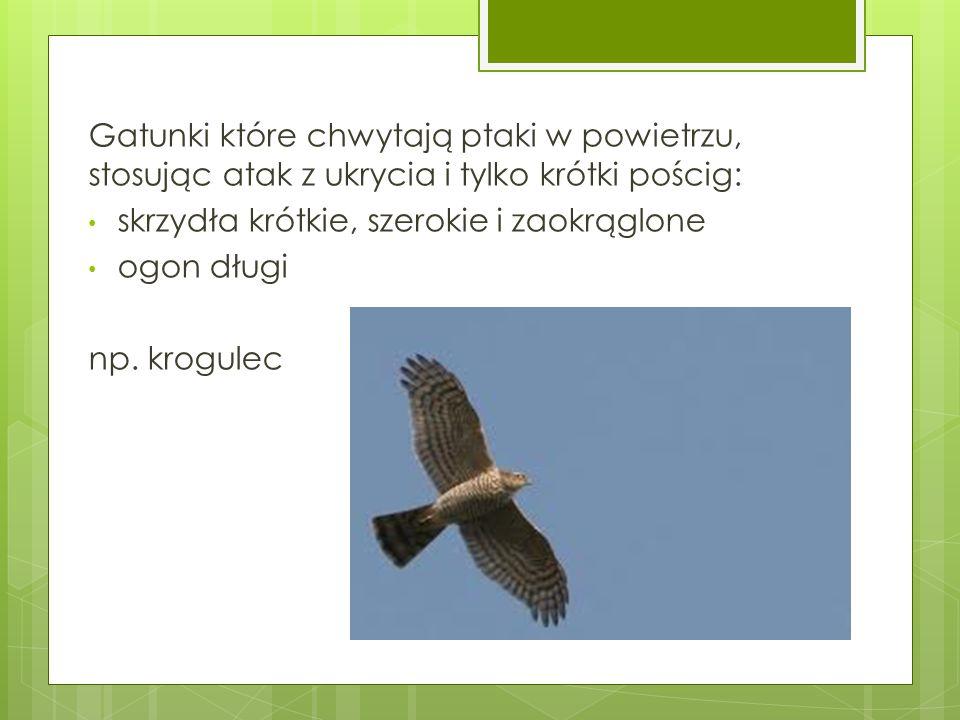 Gatunki które chwytają ptaki w powietrzu, stosując atak z ukrycia i tylko krótki pościg: