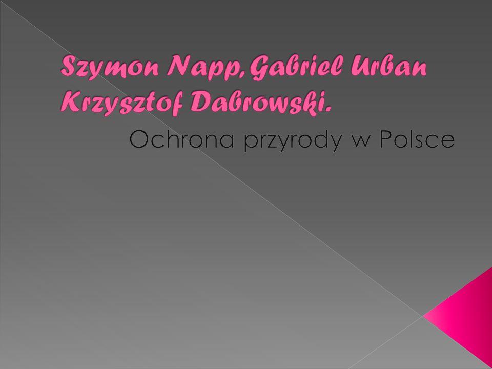 Szymon Napp, Gabriel Urban Krzysztof Dabrowski.